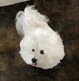 Mr. Fluffy